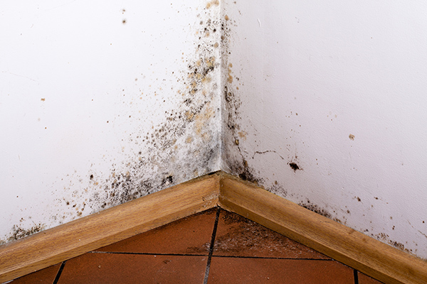 Damp Proofing removal services